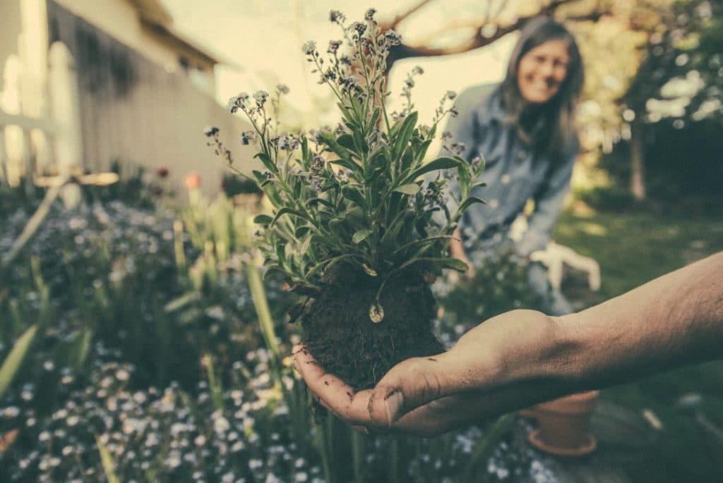 Gardening Movement